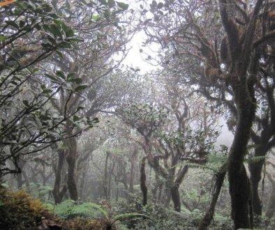 bosques-737x530