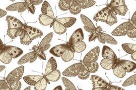 mariposa-cigarra-e-insecto-hermosos-ejemplos-animales-antiguos-fauna-grabado-del-dibujo-modelo-del-fondo-vector-del-vintage-89757506-1